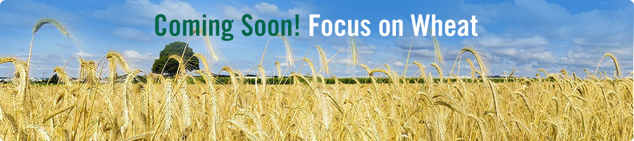 Coming Soon! Focus on Wheat