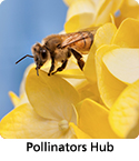 Management information and tools related to pollinators.