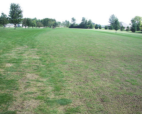 Gray Leaf Spot of Perennial Ryegrass