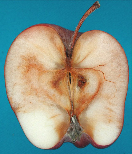 Postharvest Fruit Rots in Apples Caused by <i>Botrytis cinerea</i>, <i>Phacidiopycnis washingtonensis</i>, and <i>Sphaeropsis pyriputrescens</i>