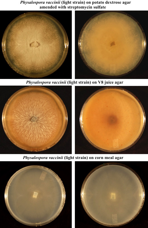 A Photographic Diagnostic Guide for Identification of the Principal Cranberry Fruit Rot Pathogens