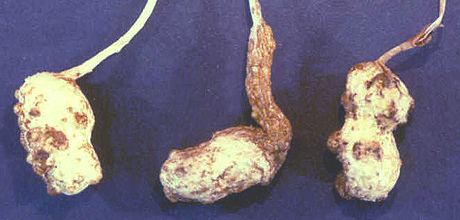 Management of the Peanut Root-knot Nematode, <i>Meloidogyne arenaria</i>, with Host Resistance