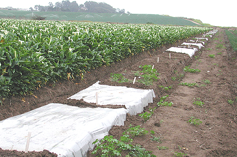 Field Application of Brassicaceous Amendments for Control of Soilborne Pests and Pathogens