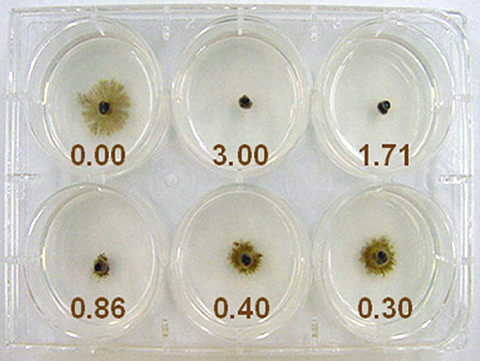 Sensitivity of Newly Identified Clades in the Sooty Blotch and Flyspeck Complex on Apple to Thiophanate-methyl and Ziram