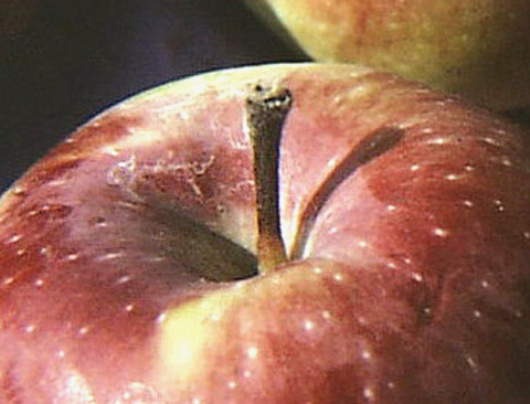 <i>Penicillium expansum</i> Invades Apples Through Stems during Controlled Atmosphere Storage