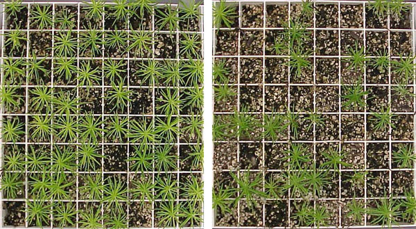 Efficacy of Chemical and Biological Agents to Suppress <i>Fusarium</i> and <i>Pythium</i> Damping-Off of Container-Grown Douglas-Fir Seedlings