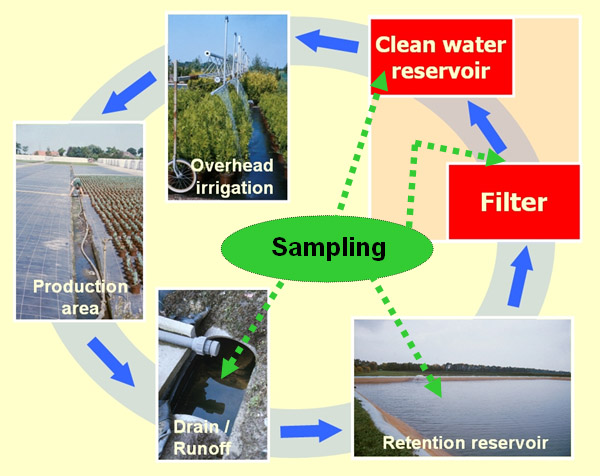 Filtration to Eliminate <i>Phytophthora</i> spp. from Recirculating Water Systems in Commercial Nurseries
