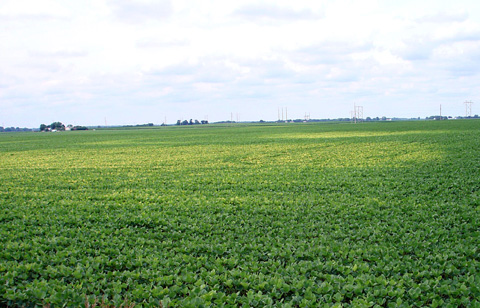 Shift in Virulence of Soybean Cyst Nematode is Associated with Use of Resistance from PI 88788