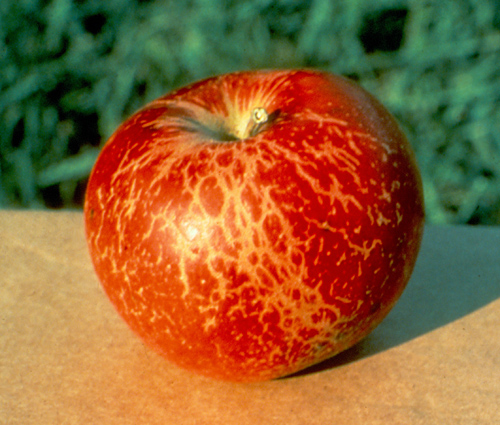 Relative Susceptibility of Selected Apple Cultivars to Powdery Mildew Caused by <i>Podosphaera leucotricha</i>