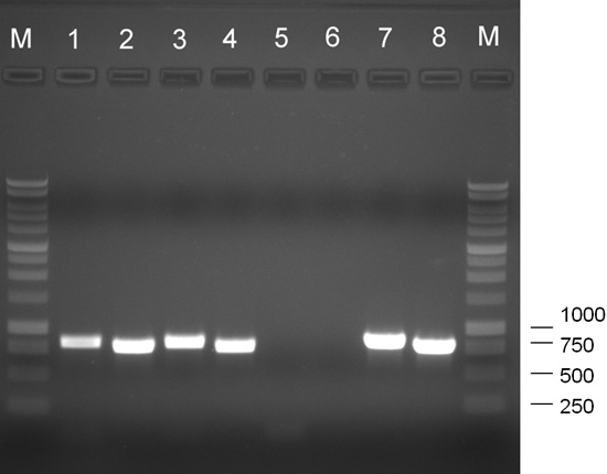 Identification of Two <i>Tobacco rattle virus</i> Variants Associated with Line Pattern Disease of Bleeding Heart in Ohio