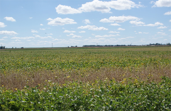 Climatic and Environmental Trends Observed During Epidemic and Non-epidemic Years of Soybean Sudden Death Syndrome in Iowa
