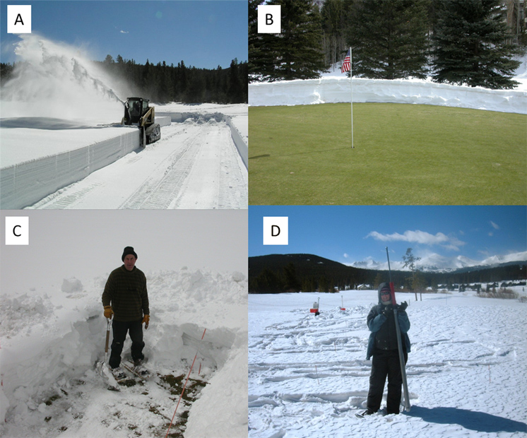 Effect of Snow Removal on Typhula Blight Development at High Elevation Golf Courses in Colorado