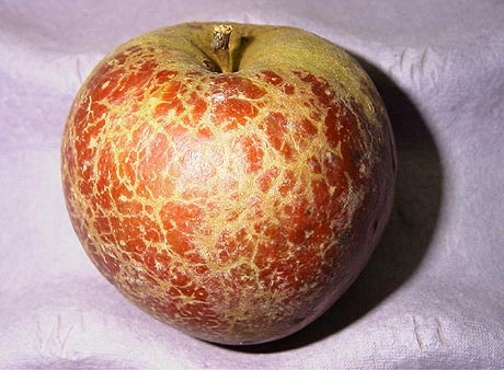 Efficacy of Kaolin-Based Particle Films to Control Apple Diseases