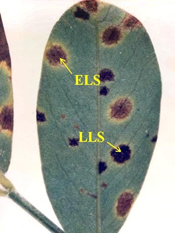 Applications of Mixtures of Copper Fungicides and Chlorothalonil for Management of Peanut Leaf Spot Diseases