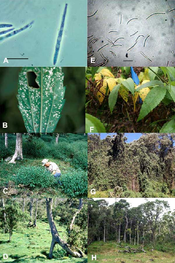 Plant Pathogens at Work: Progress and Possibilities for Weed Biocontrol Classical versus Bioherbicidal Approach