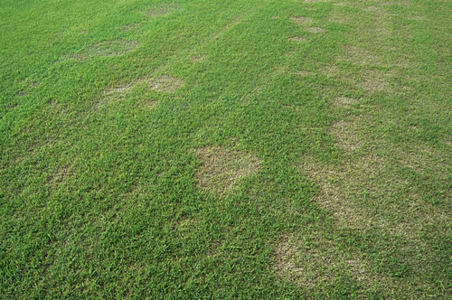 Spring Dead Spot of Bermudagrass: A Challenge for Researchers and Turfgrass Managers