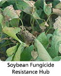 Information center on soybean fungicide resistance management.